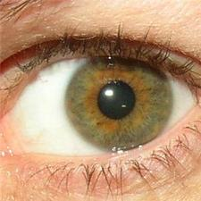"Cornea ""uses stem cells to repair itself"""