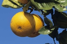 "Vitamin C ""could boost eye health"""